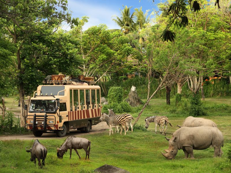 Safari Journey